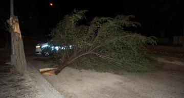 Erzincan'da etkili olan şiddetli rüzgar ağaçları yerinden söktü