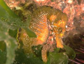 Temizlenen İzmit Körfezi nde 57 farklı balık ve canlı türü yaşıyor